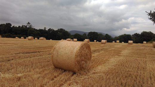 Haystack in a field